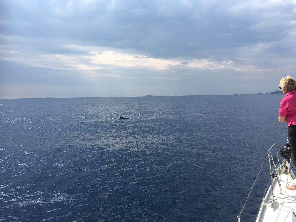 Dolphin Spotting